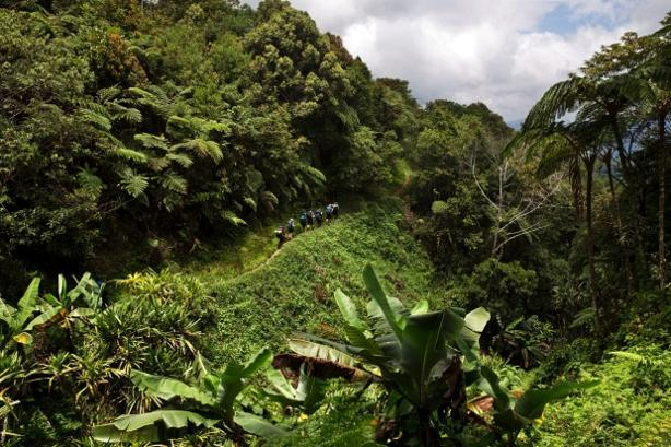 Easy mountain trail in Papua New Guinea